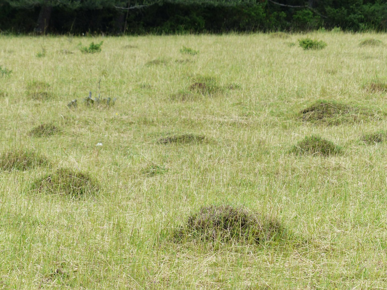 meadow glade ant hill free photo