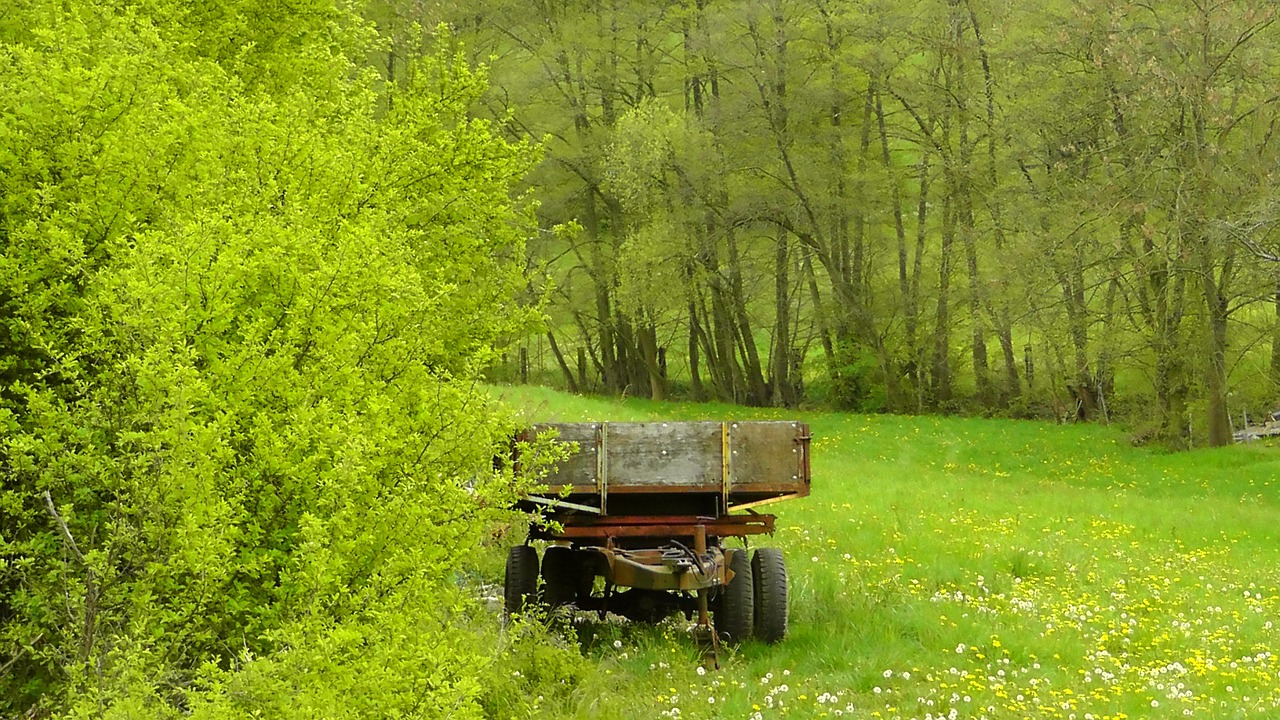 meadow,grass,meadow grass,spring,plant,grasses,green,trailers,dare,wagon,old,free pictures, free photos, free images, royalty free, free illustrations