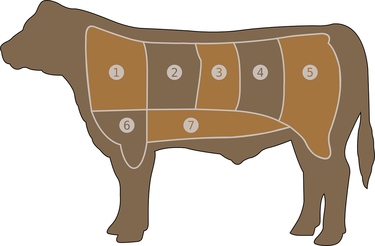meat chart beef butcher free photo