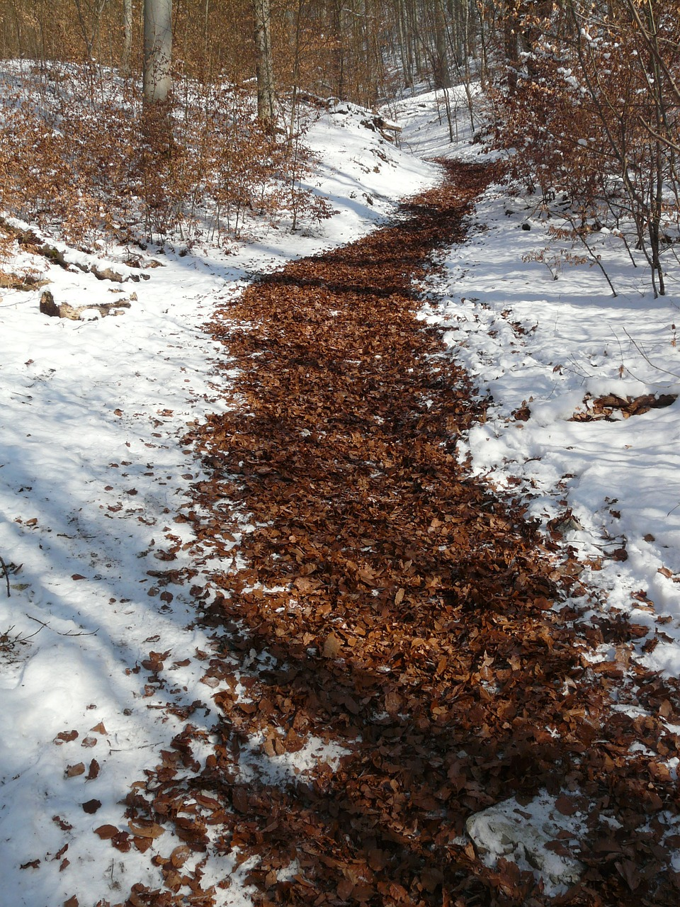 migratory path trail winter free photo