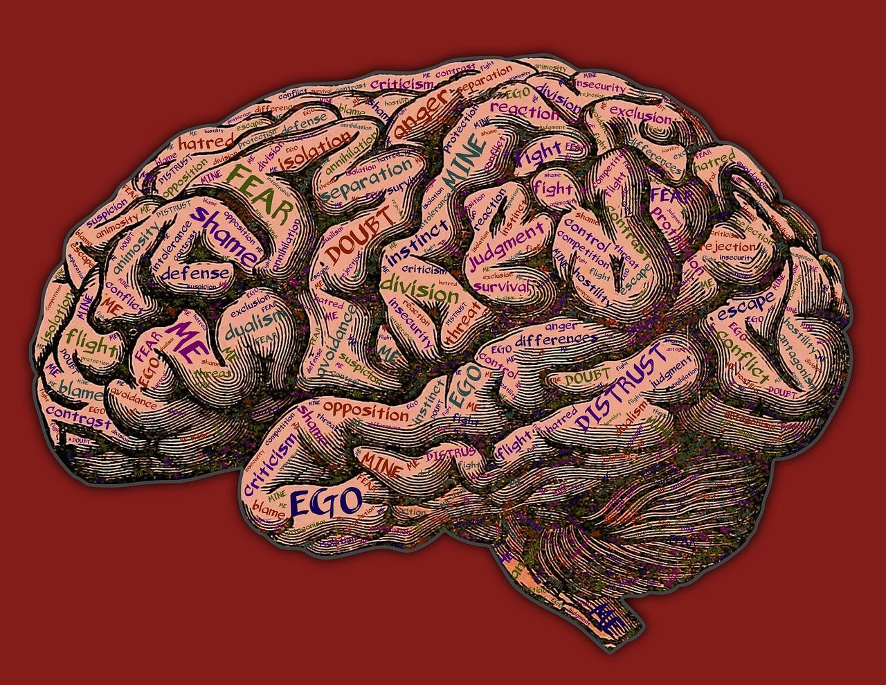 """Image result for mind"""""""