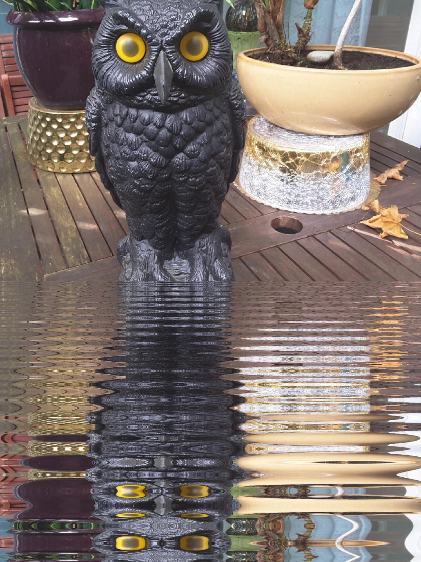 Owl,reflection,mirror,effect,black - free photo from needpix com