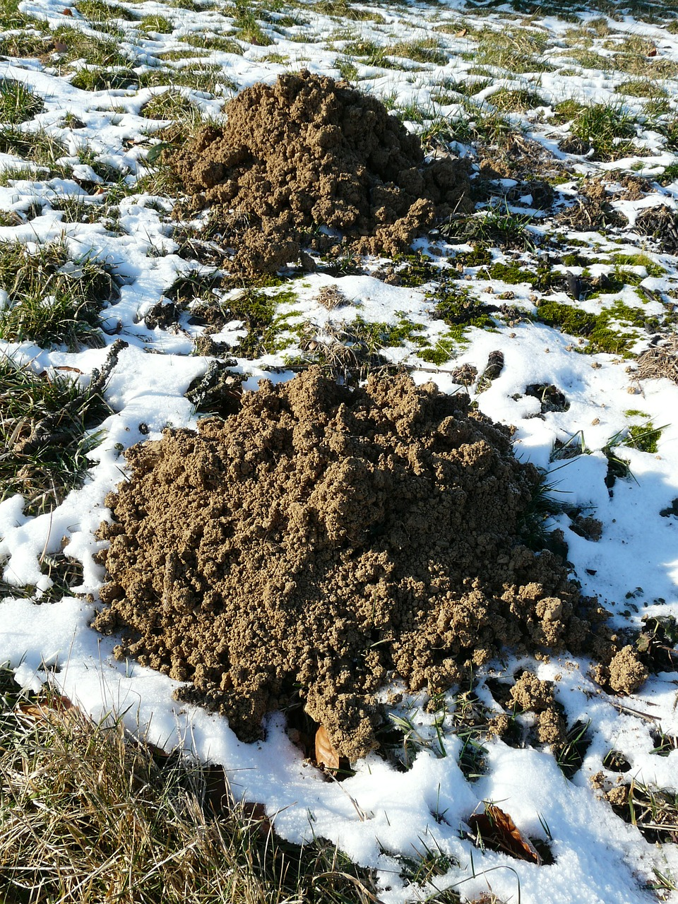molehill mole earth free photo