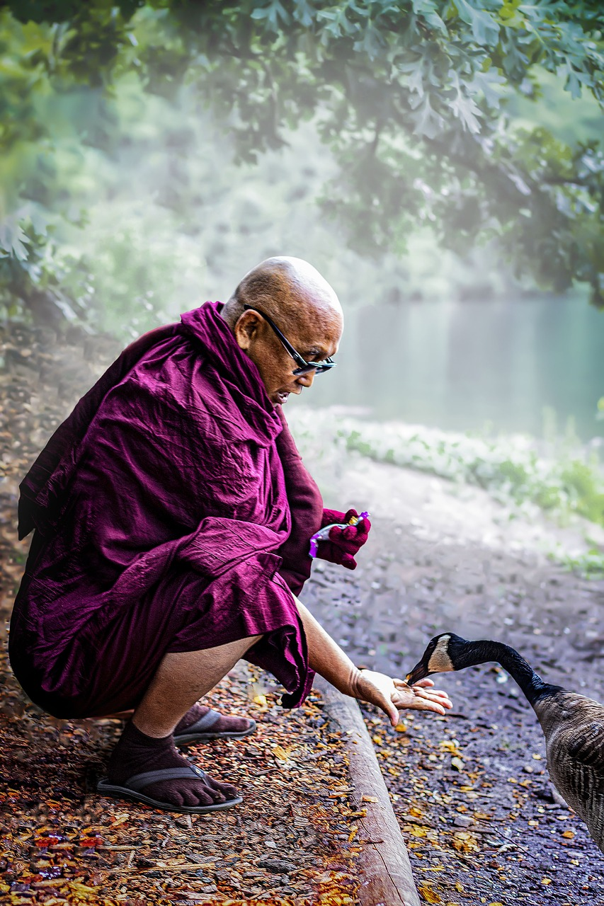 monk, theravada buddhism, bhikkhu, mahathera, feed, compassion, metta, buddhist, feeding, duck, mercy, loving kindness, asian squat,free pictures, free photos, free images, royalty free, free illustrations, public domain