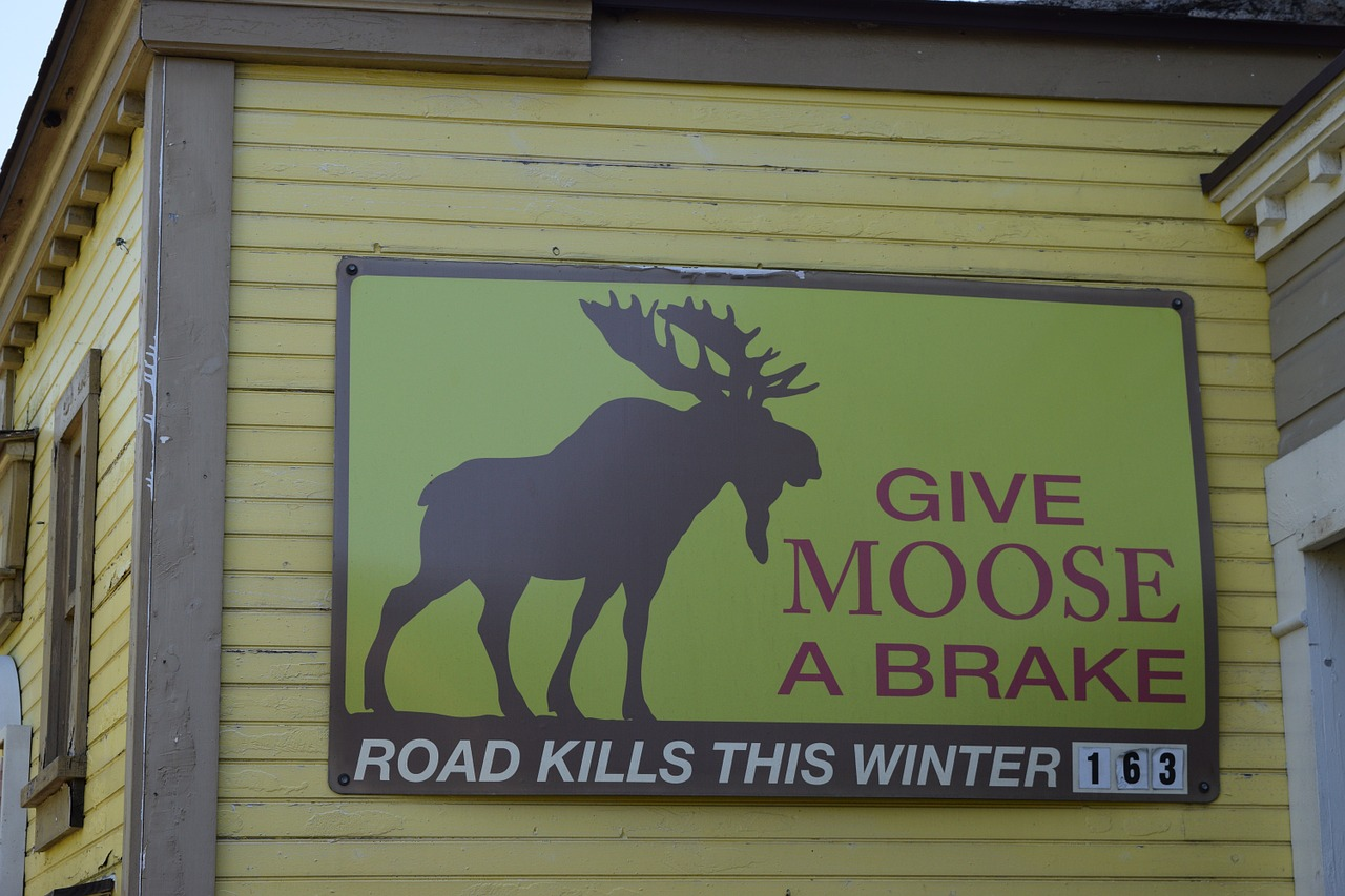 moose road kill sign free photo