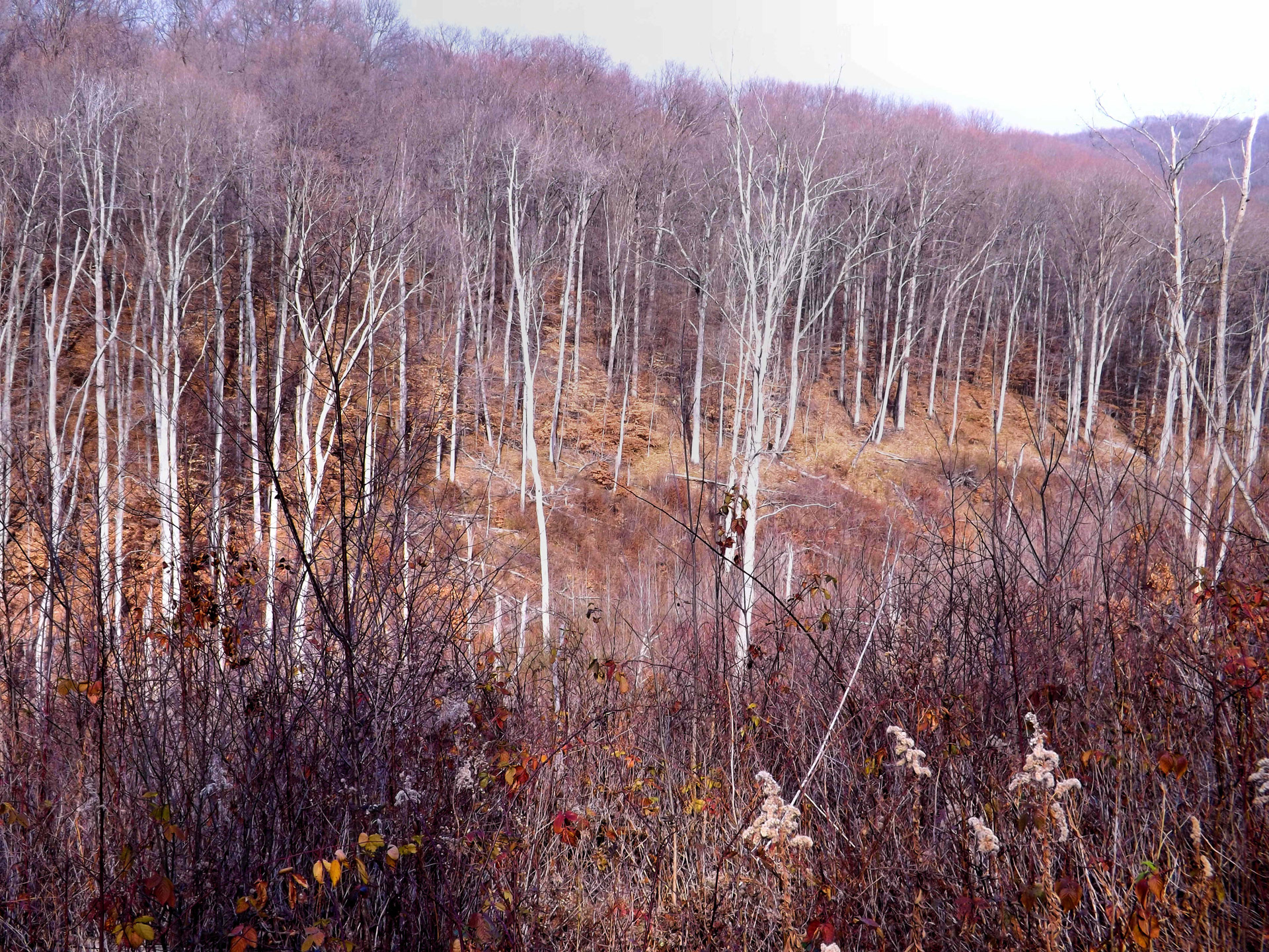 Indiana,morgan,monroe,state forest,hike - free photo from needpix com