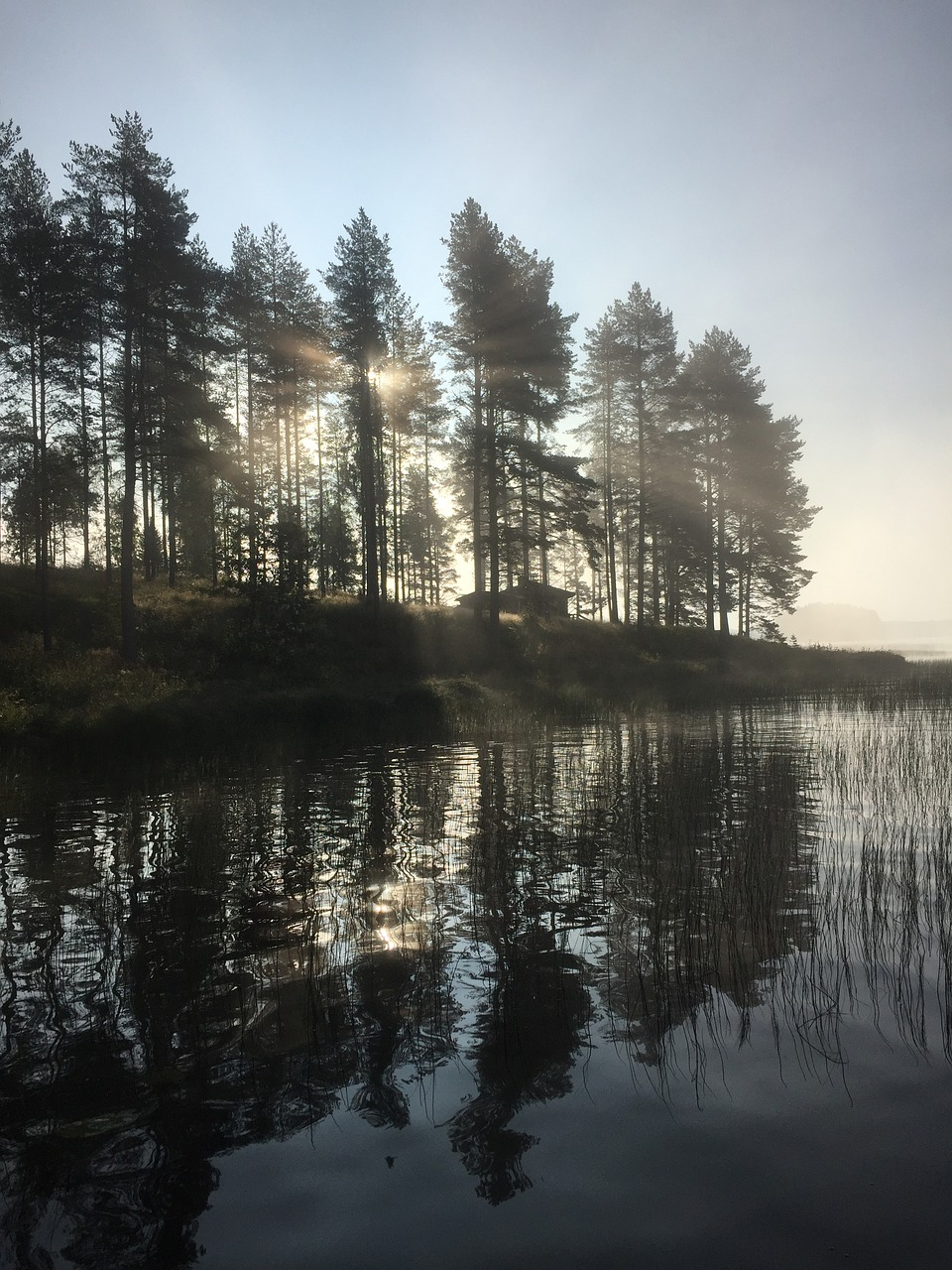 morning,fog,mist,island,lake,sunny,nature photo,pine,cape,more on,free pictures, free photos, free images, royalty free, free illustrations, public domain