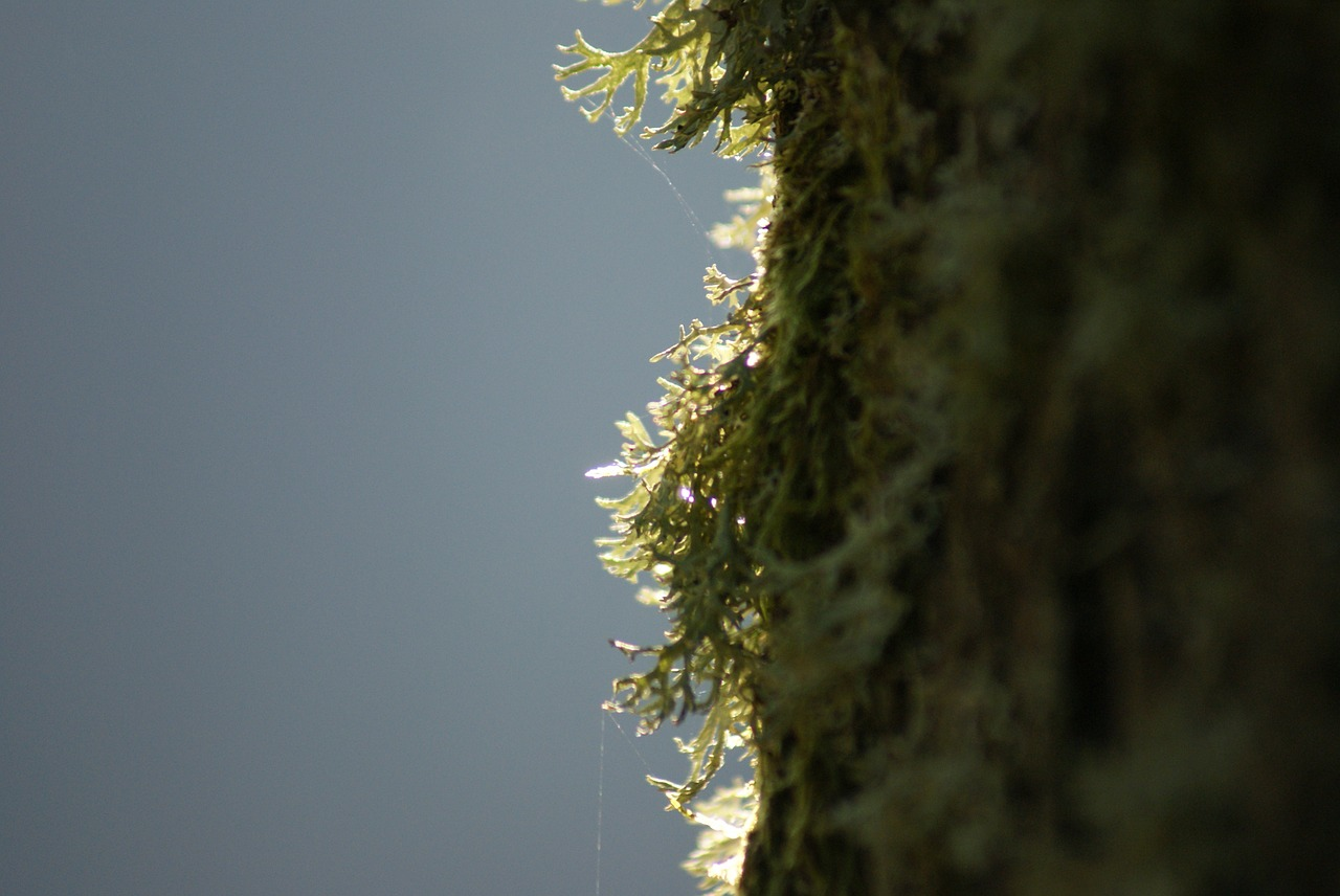 moss nature tree free photo
