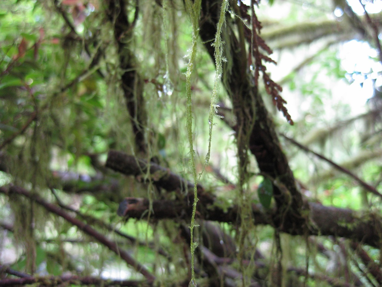 moss trees branch free photo