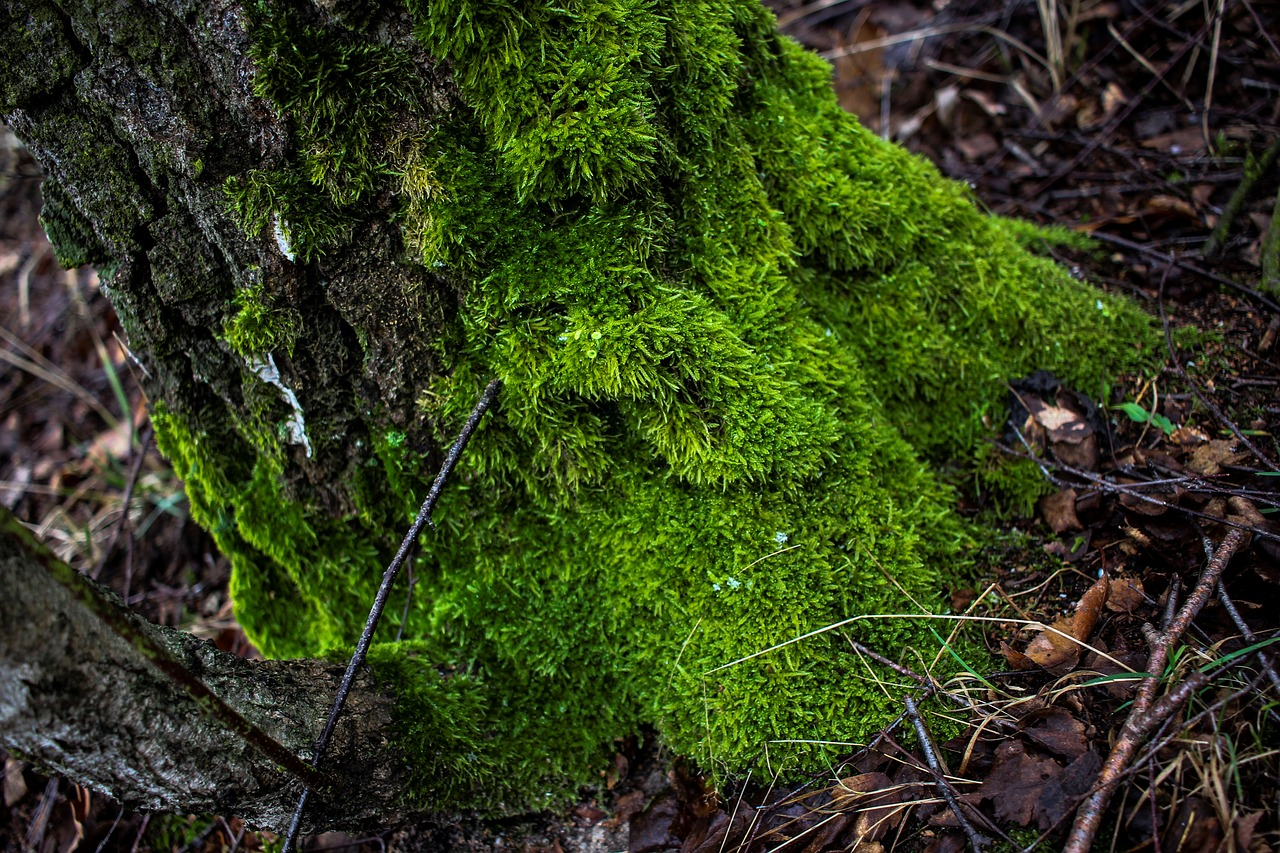 moss, tree, green, dirty, wet, rained out, winter, cold, cold season, trist, aesthetic, background, nature, forest, leaves,free pictures, free photos, free images, royalty free, free illustrations, public domain