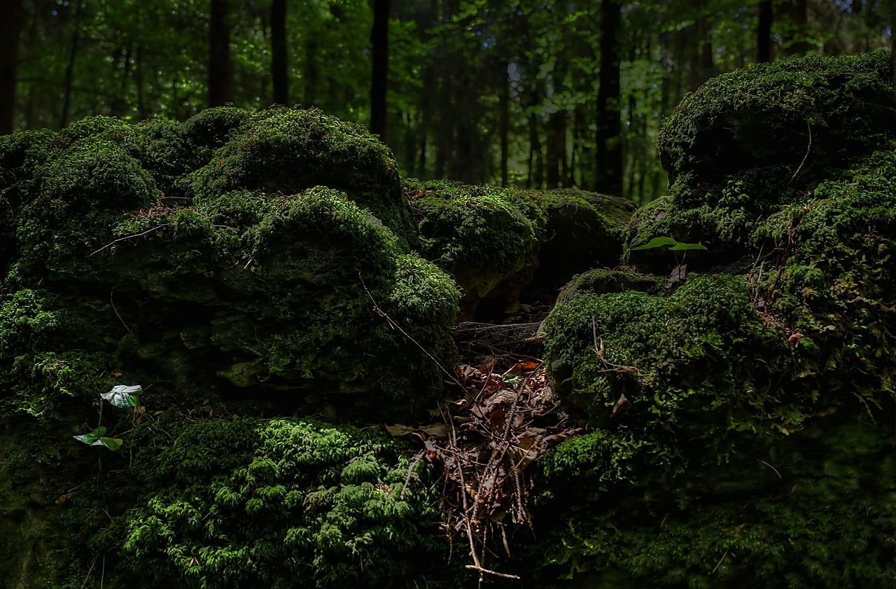 moss forest green free picture