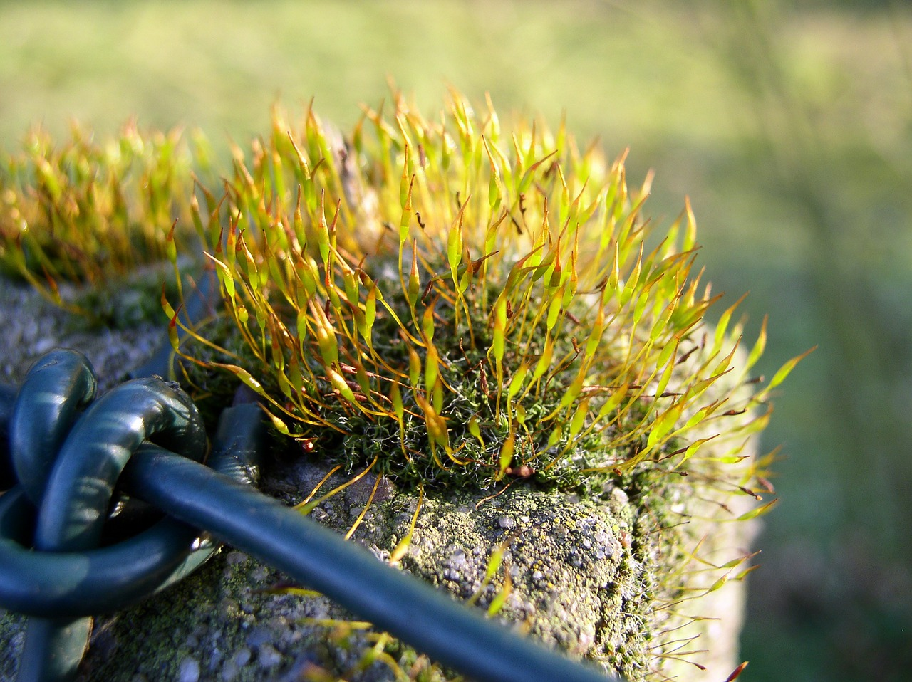 moss wall wire mesh free photo