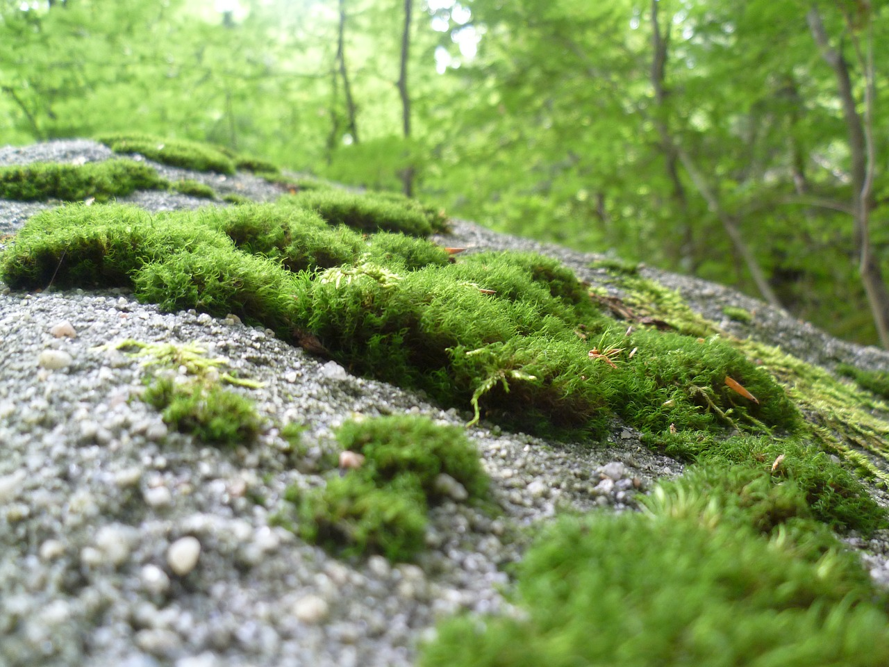 moss nature forest free photo