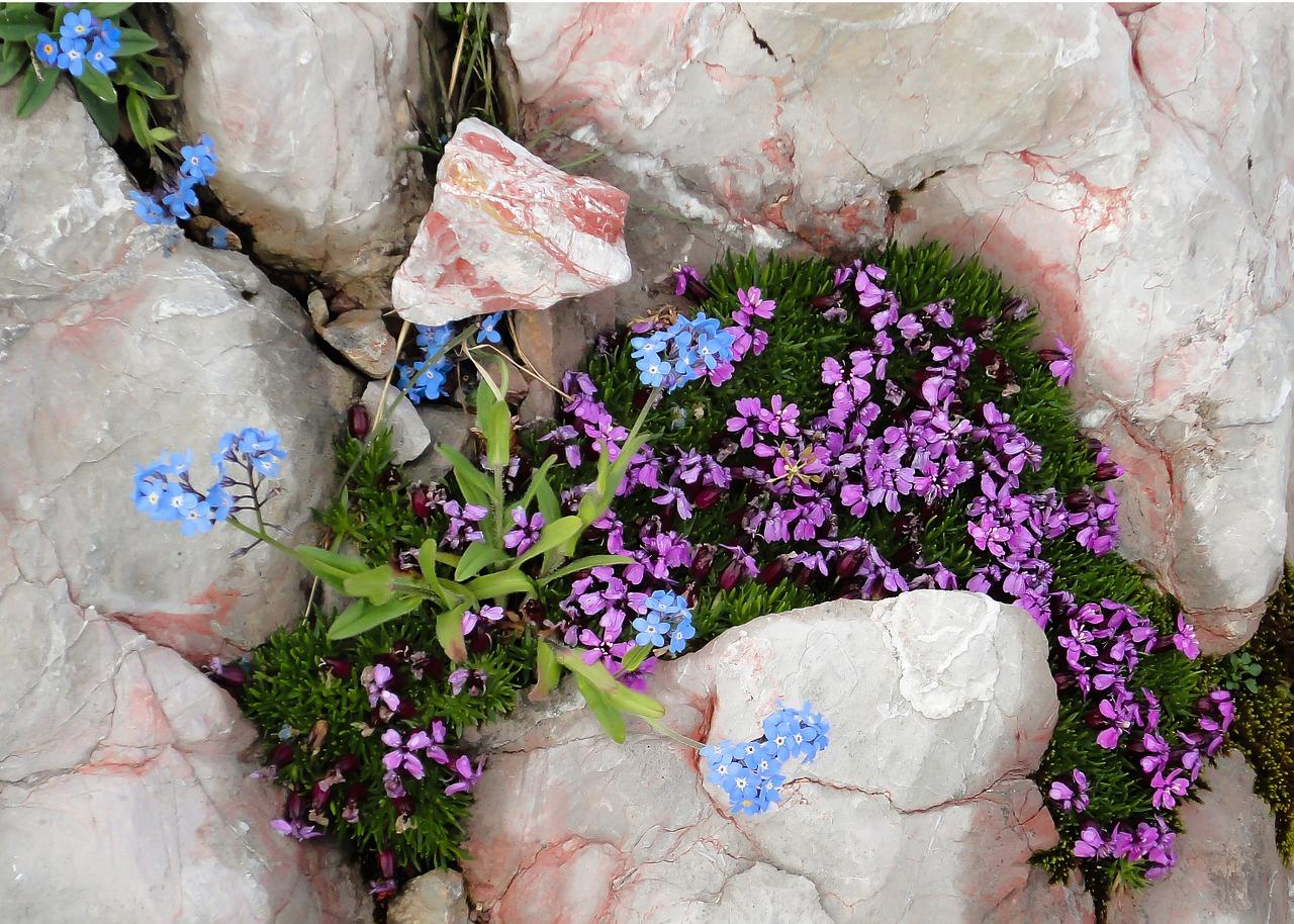 Mountainsflowersmountain Flowersspringnature Free Photo From