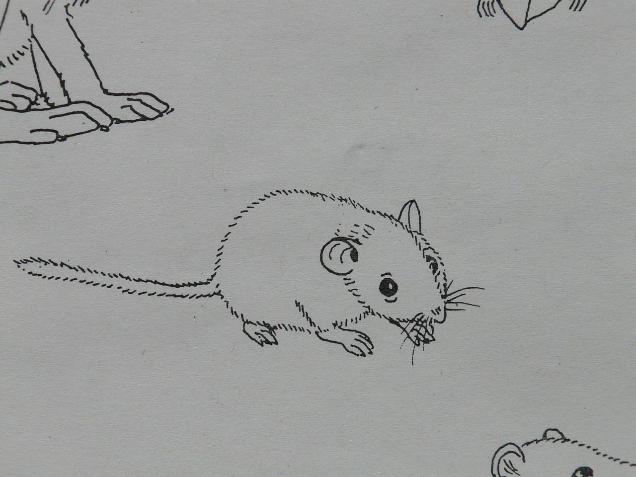 mouse animal coloring pages free photo