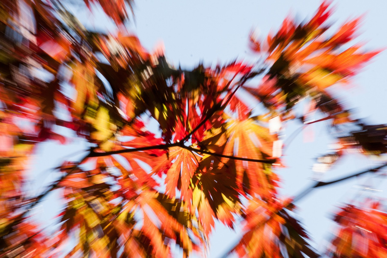 movement leaves colorful free photo