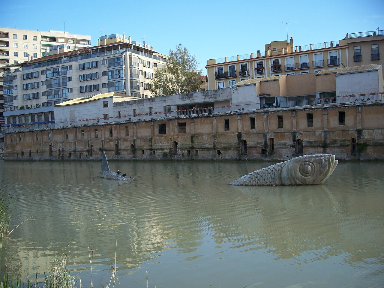 Murcia,river,safe,free pictures, free photos - free image from ...