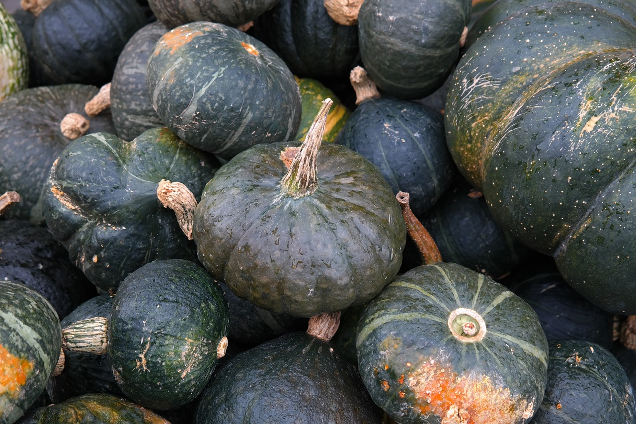 muscat de provence pumpkins green free photo
