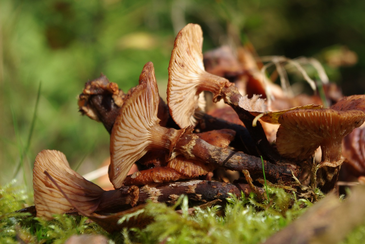mushrooms forest ground free photo