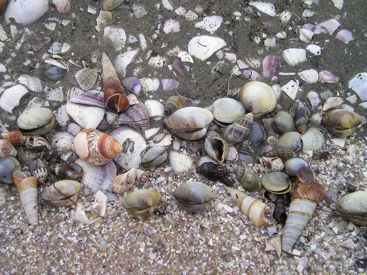 mussels new zealand south island free photo