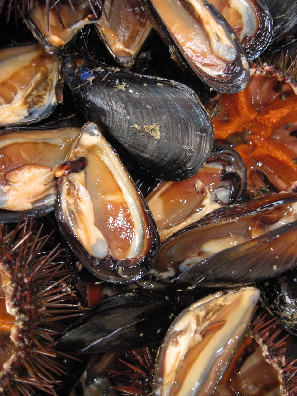 mussels seafood edible free photo