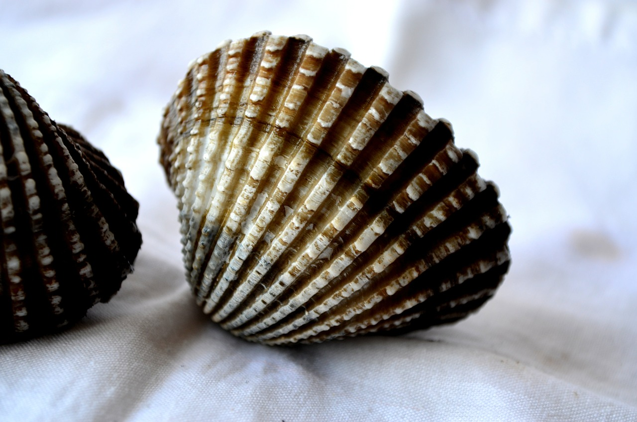 mussels shells sea life free photo