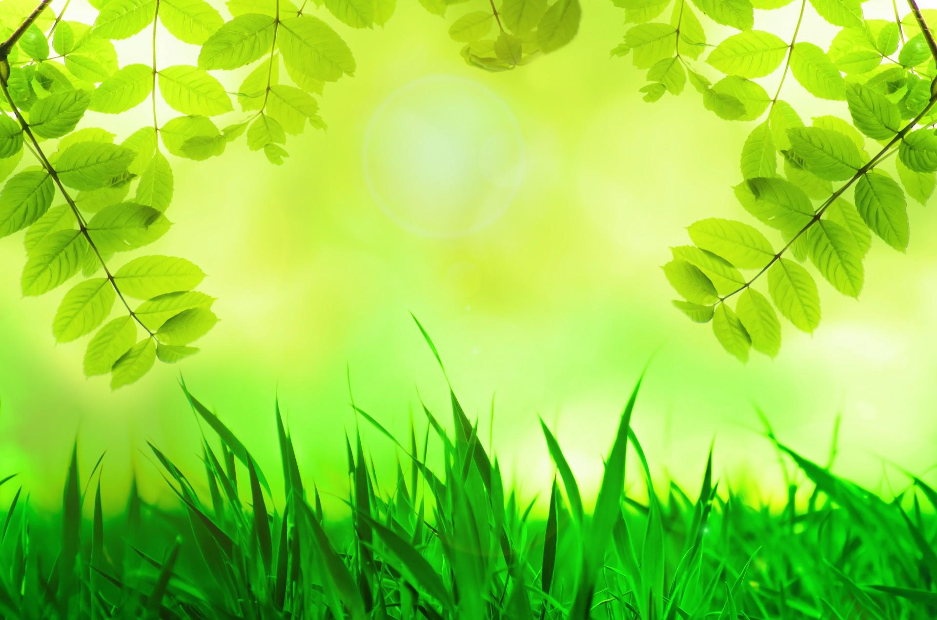 green grass background - HD1920×1271