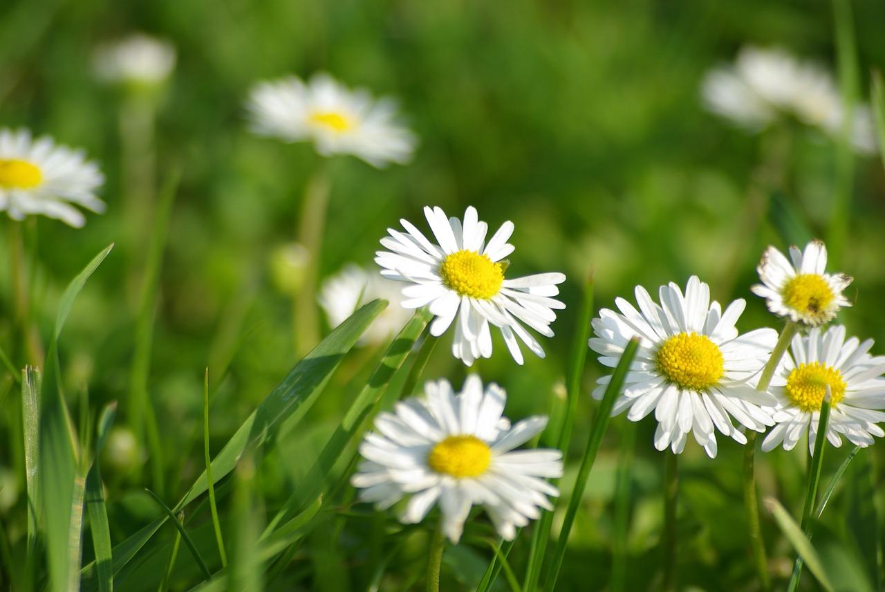 Natureflowerssummer Flowerswhite Flowersspring Flowers Free
