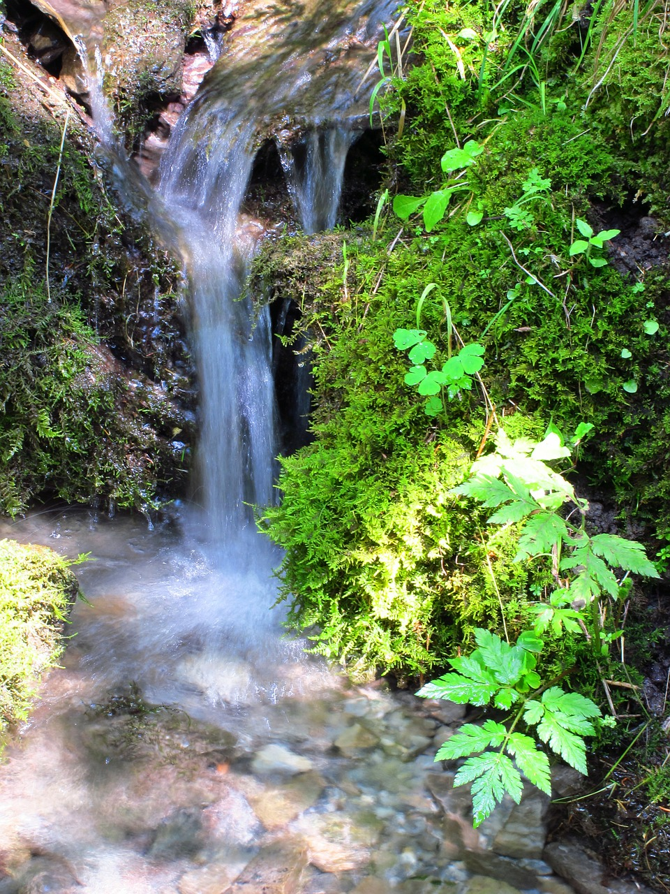nature water forest free photo