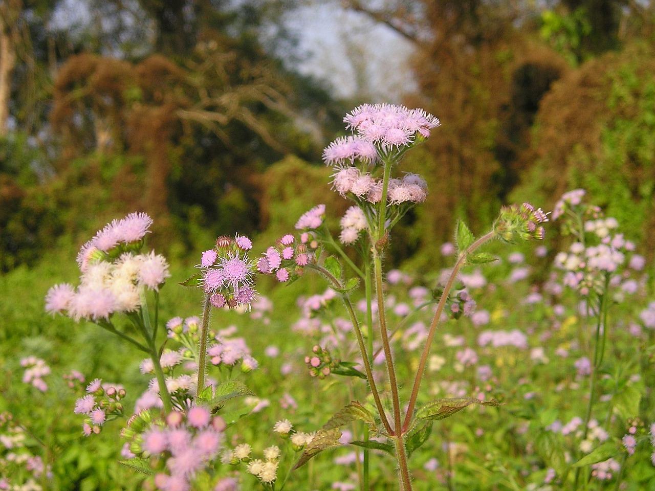 nepal flower national park free photo
