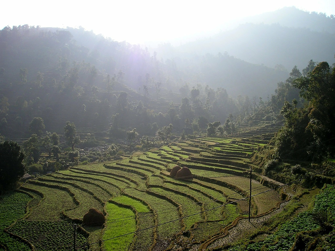 nepal rice terraces terraces free picture