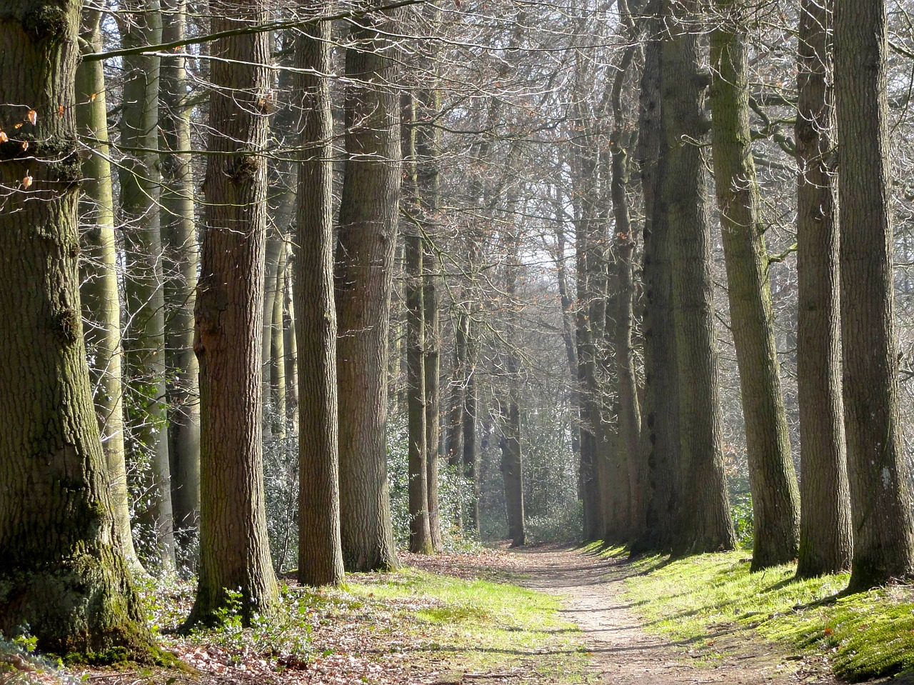 netherlands landscape forest free photo