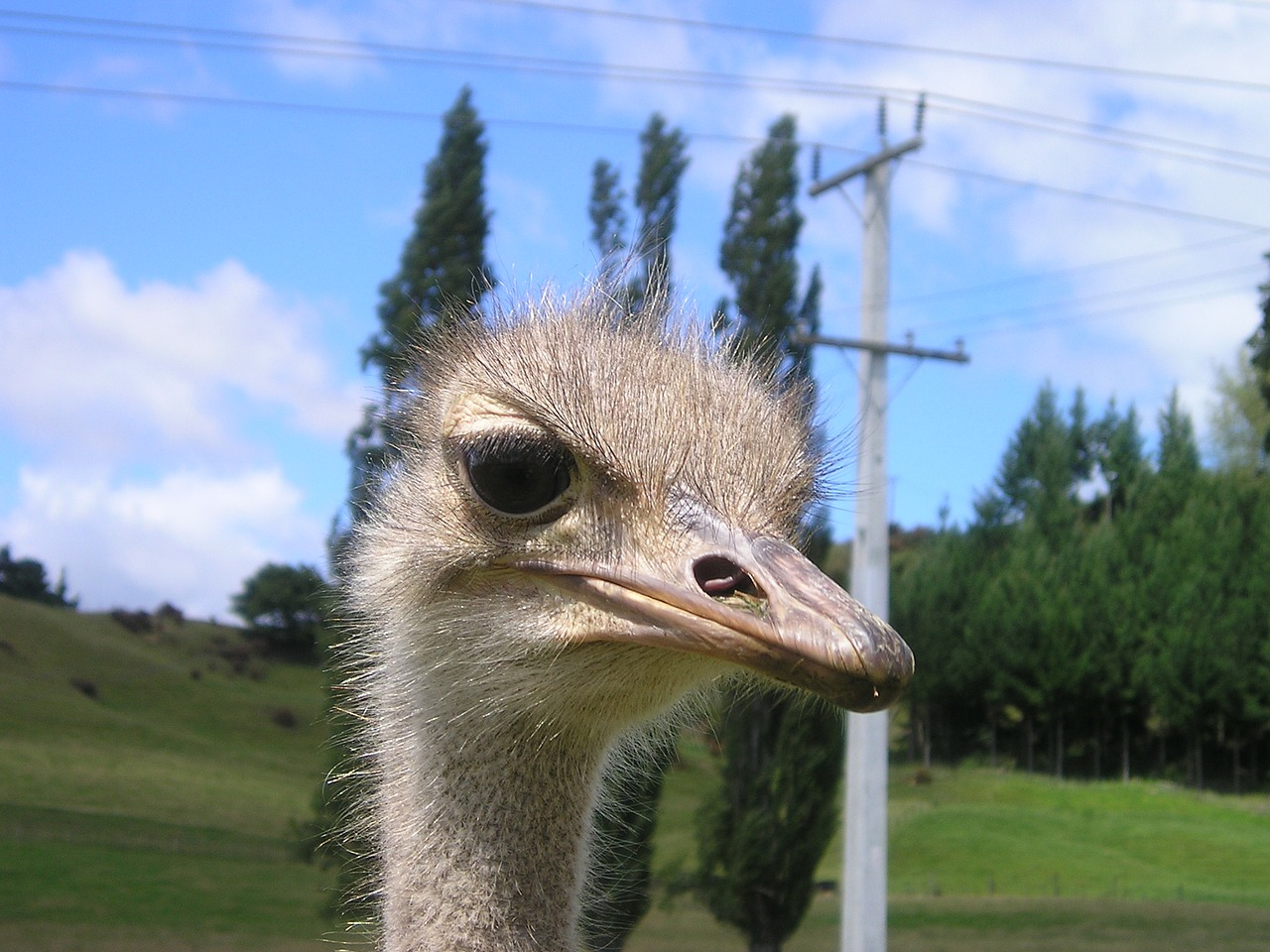 new zealand bouquet ostrich farm free picture