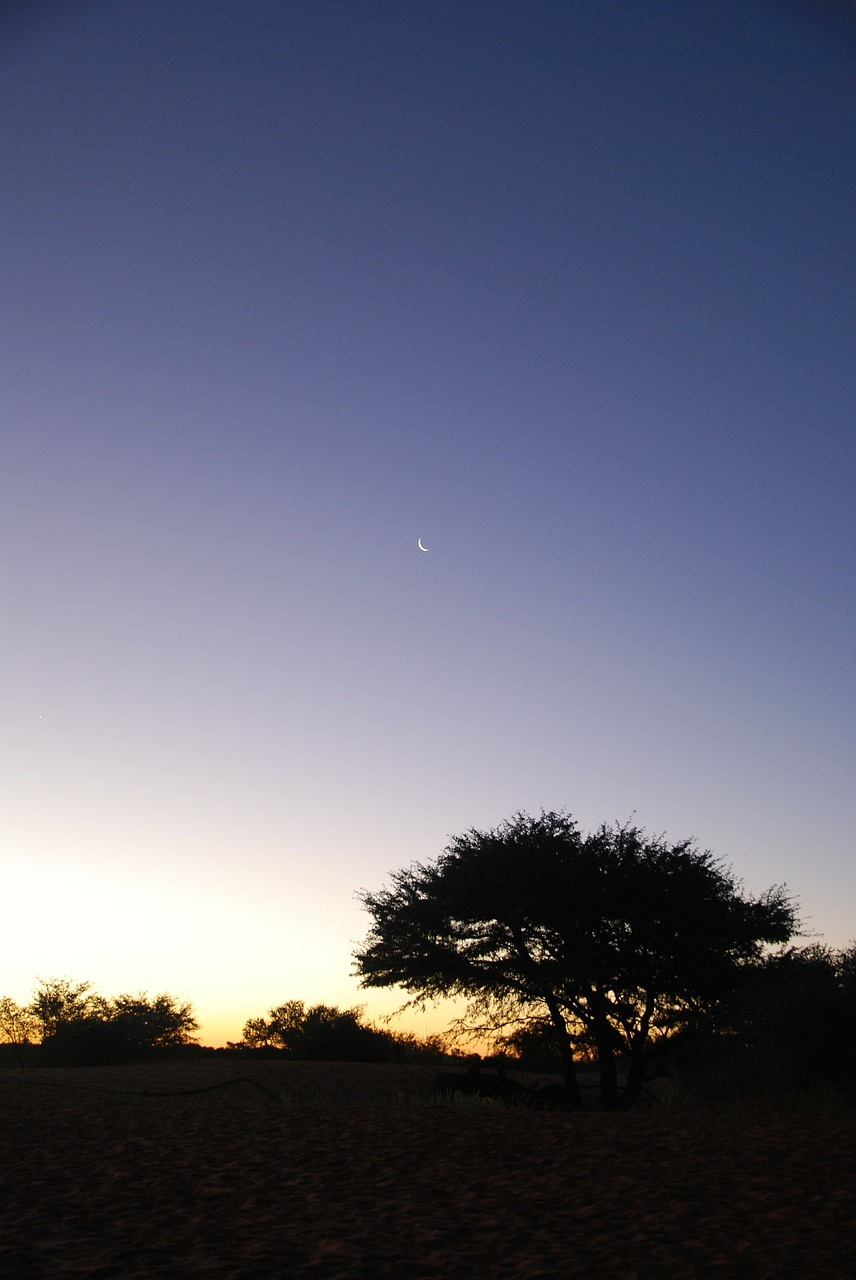 night desert kalahari free photo