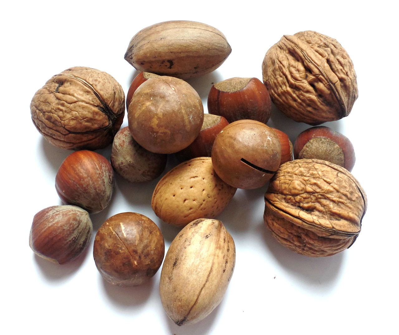 nut walnut brazil nut free photo