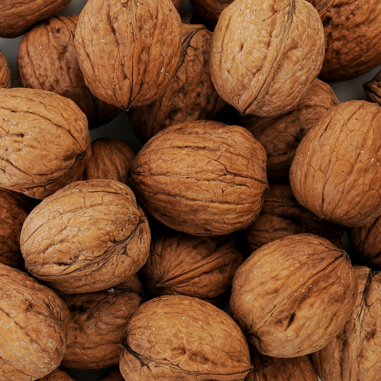 nuts walnuts walnut free photo
