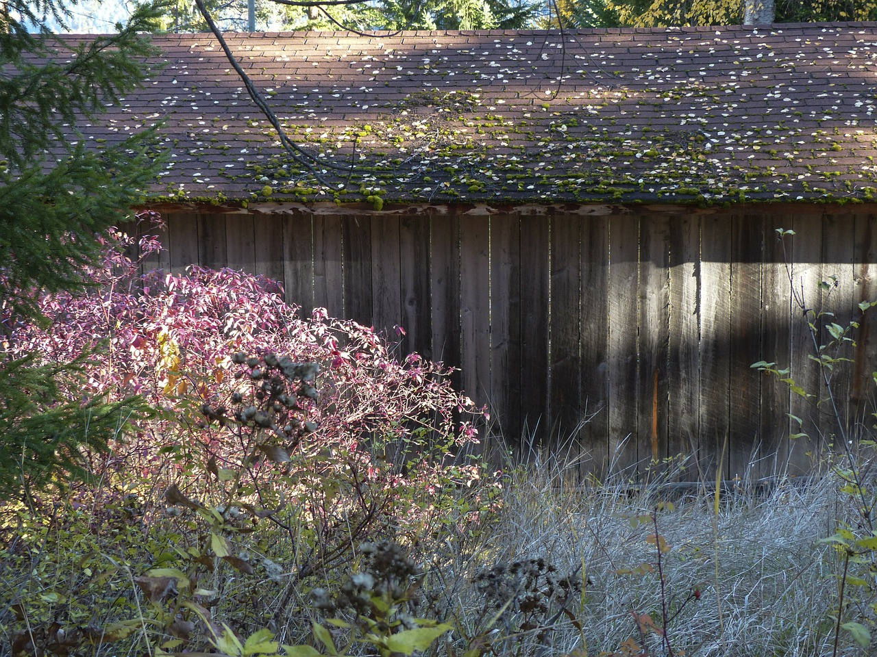old wooden shed free photo