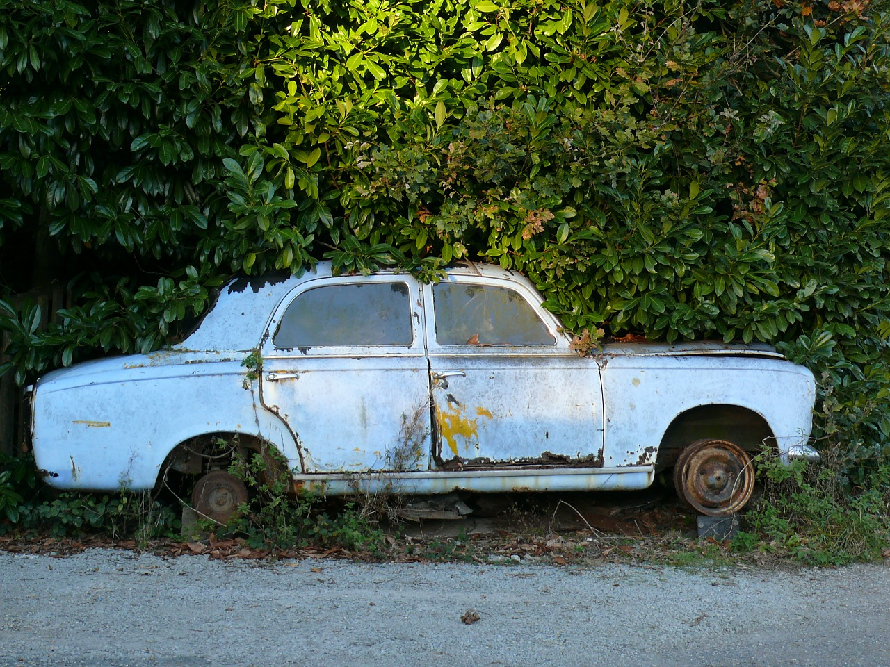 old car casse auto 403 peugeot free photo