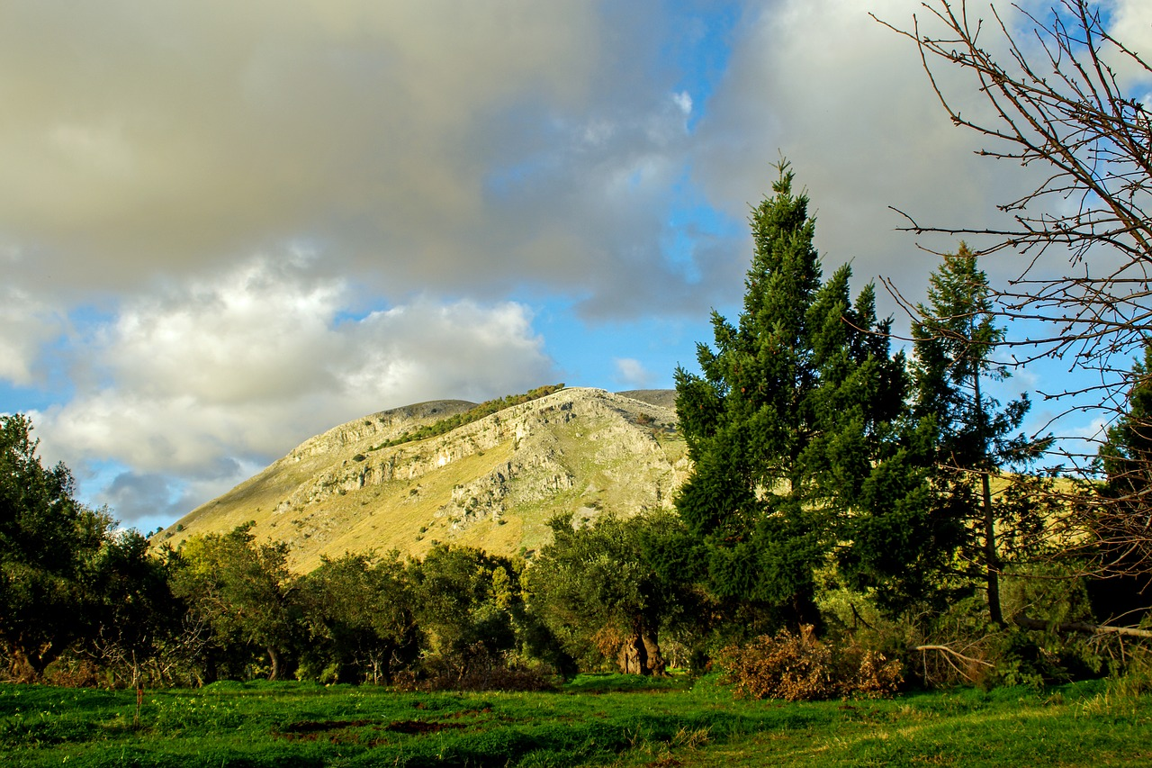 olive grove trees agriculture free photo