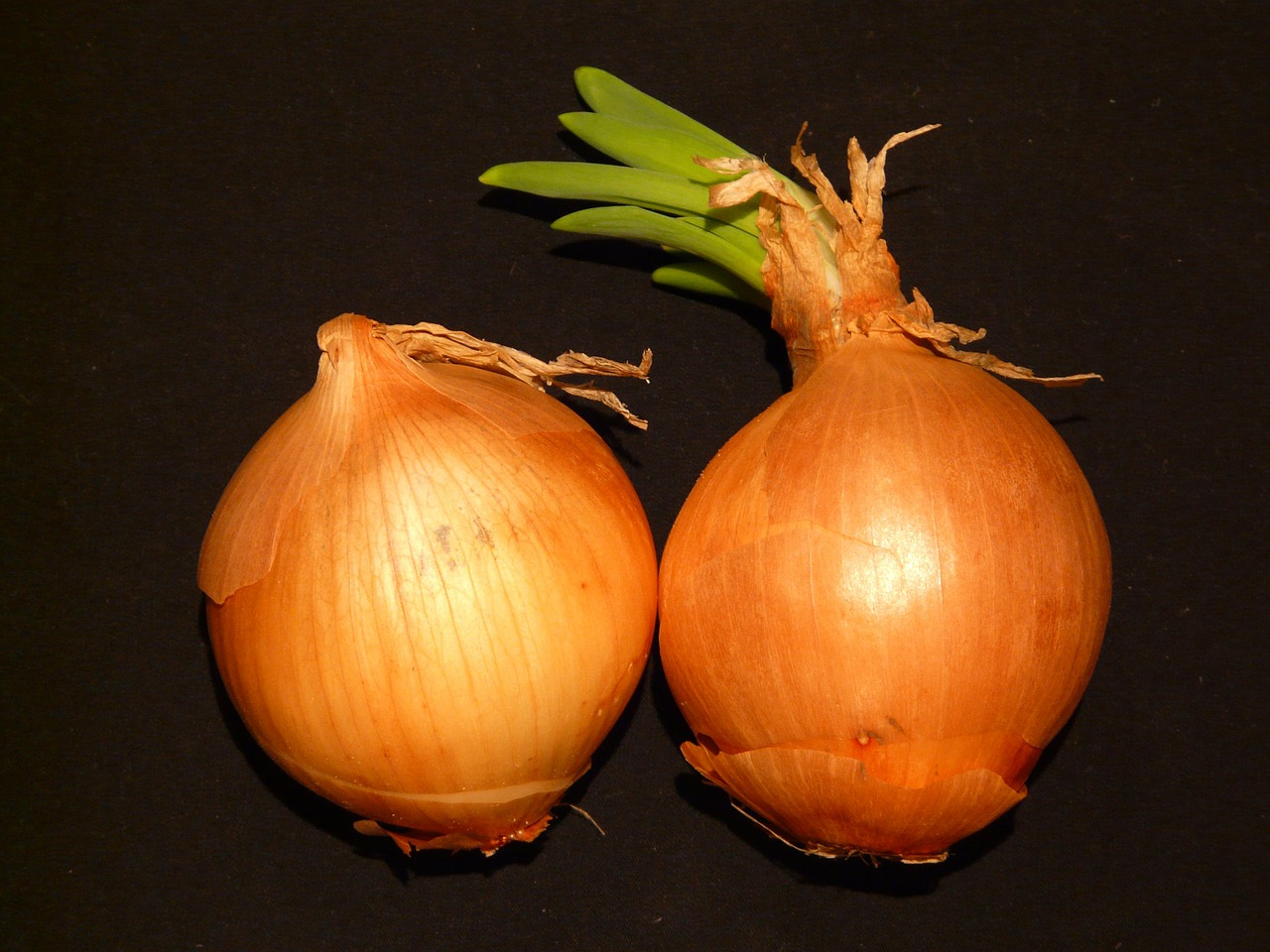 onion vegetables sharp free photo