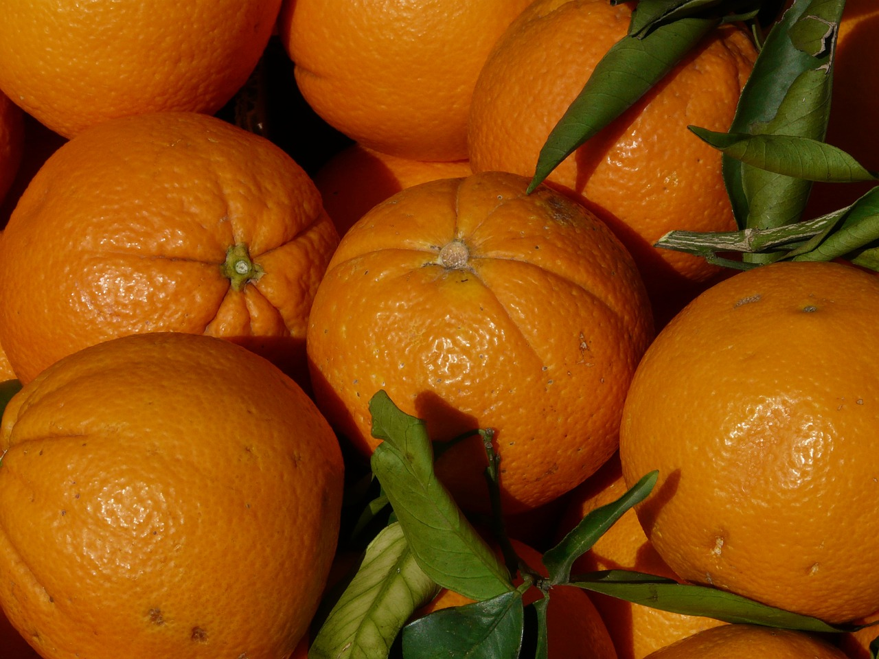 oranges orange fruit free photo