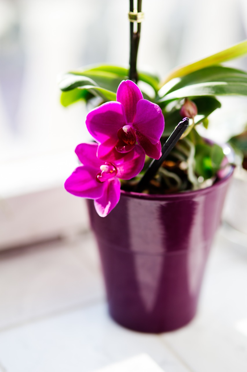 Orchidflowerhouseplantspink Free Photo From Needpix