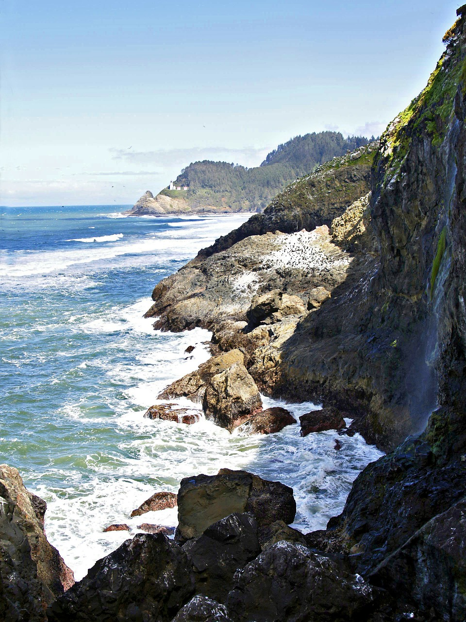 oregon usa coastal line free photo