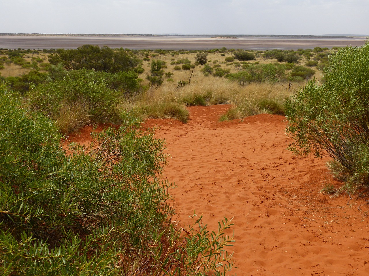 outback atmosphere bush free photo