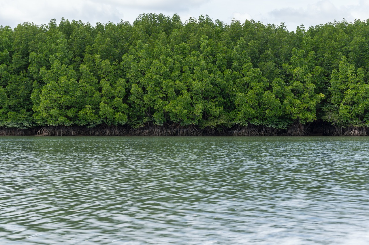 pa the mangrove forest sea free picture