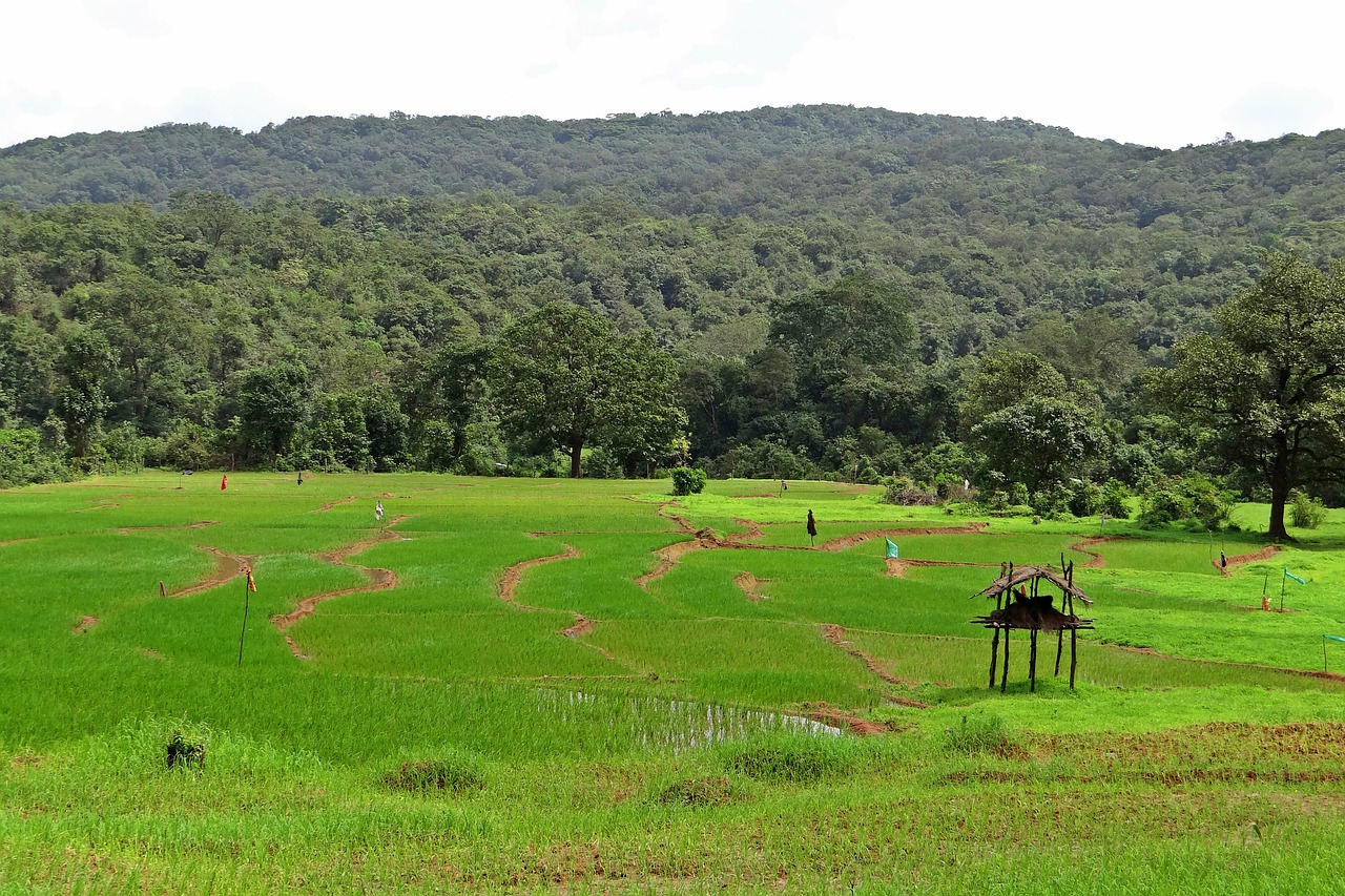 paddy fields farm watch western ghats free photo