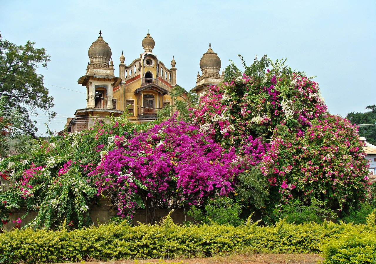 palace spire bougainvillea free photo