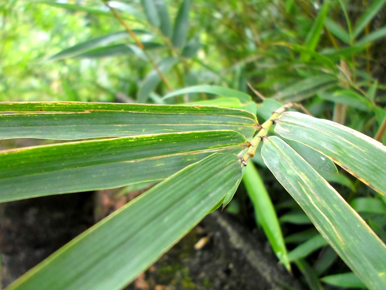 palm leaves nature free photo