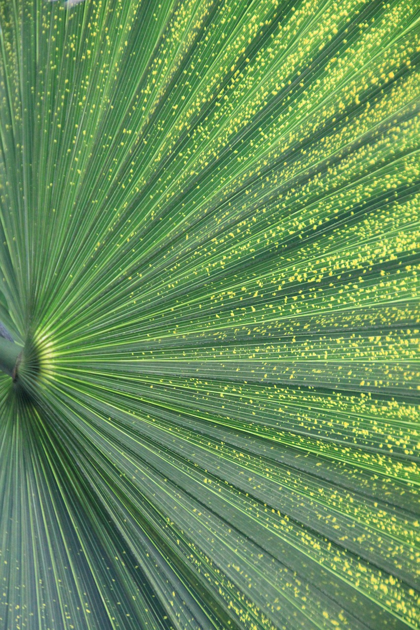 palm leaf plant green free photo
