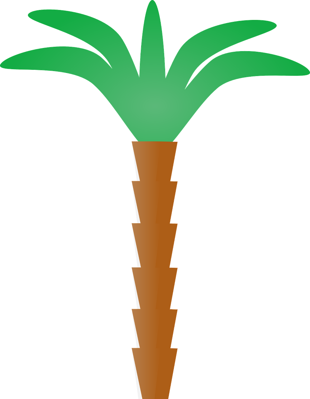palm tree tropical summer free photo